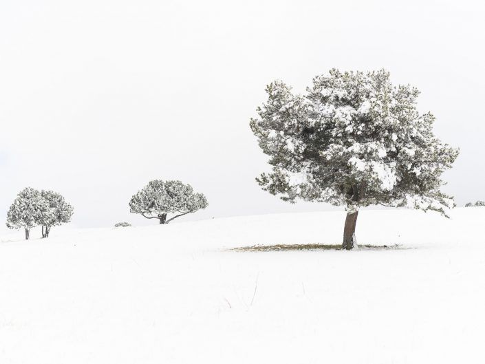 Blanca ceretania