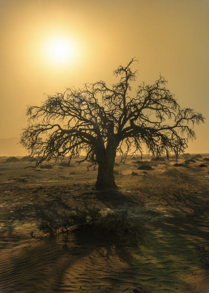 Acacia en el desierto del Namib