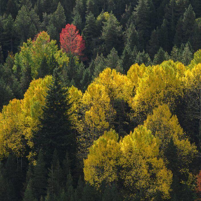 Bosque de La Molina