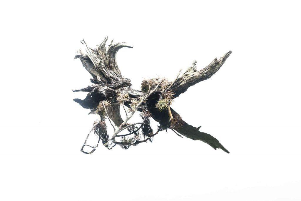 El tronco eterno