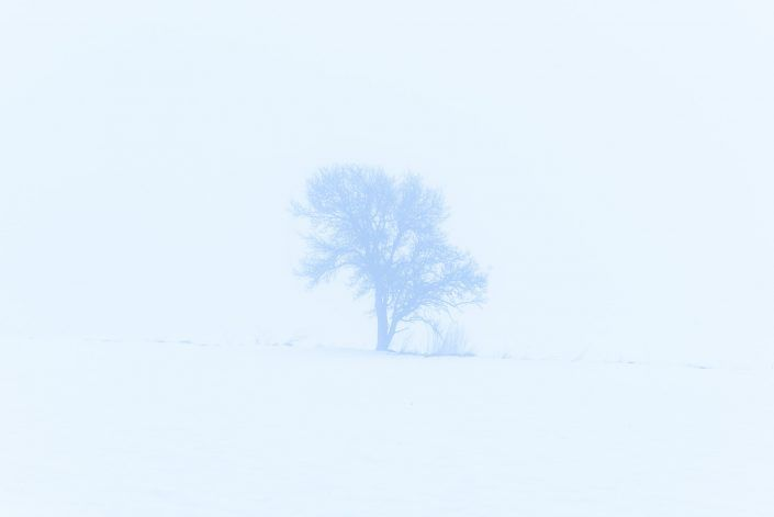 The lonely tree of All
