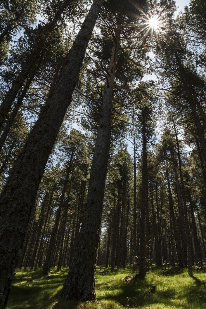 Bosc d'Osseja