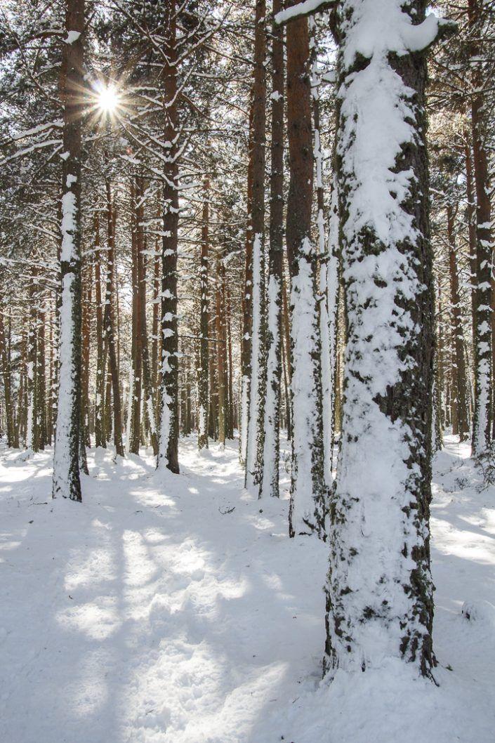 Bosque de Matemale